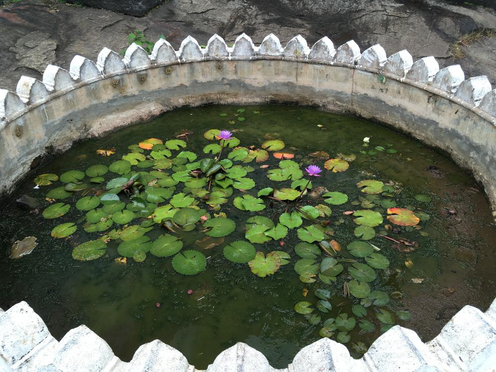 Tranquil pool with lily pads