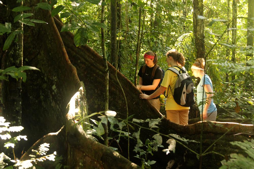 Gusties studying rain forest